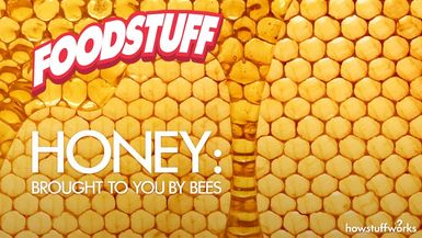 FoodStuff - Honey: Brought to You by Bees